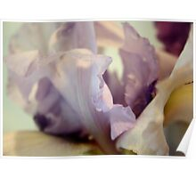 Pale Lilac Iris Abstract Poster