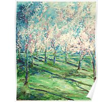 Cherry Trees Washington DC Painting Poster
