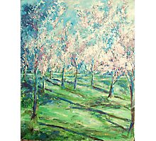 Cherry Trees Washington DC Painting Photographic Print