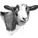Curious goat sk098 by schukinart