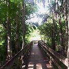 Walkway to the Light by Ilene Clayton