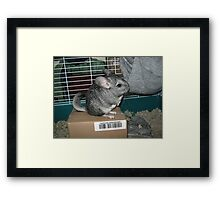 Unbelievable Chinchilla