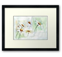 The Little Daisy  Framed Print