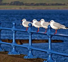 Gulls by Eddie Dowds