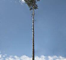 As Far As Elevation by Lucia Galovicova
