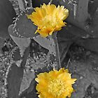 Blooms of Summer-Black & Yellow by Rob PItzer by Rob Pitzer