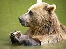 Brown Bear, gone for a dip by Laura Kelk