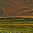 A horse in a great field by costy33