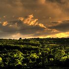 Hard clouds above trees by costy33