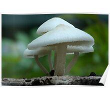 Fungi season 33 Poster