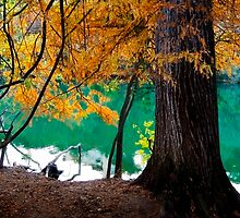 Fall Tree by Skip Hunt