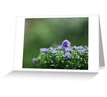 On Gorgeous Green Greeting Card
