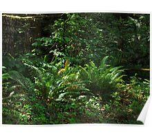Oregon's Native Ferns Poster