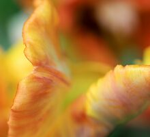 Abstract Tulip 1 by RA-Photography