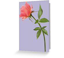 Romantic pink rose Greeting Card
