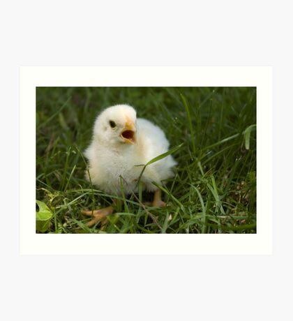 Baby chick 2 Art Print