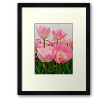 PINK CANDY TULIPS Framed Print