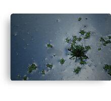 Water Spider Canvas Print
