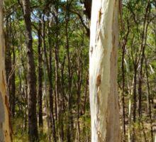 Summer gums - Sinclair's Gully, Norton Summit, Adelaide Hills Sticker