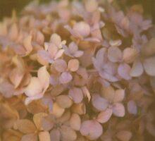 Pink Hydrangea Polaroid by madebynini