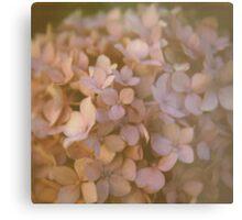 Pink Hydrangea Polaroid Metal Print