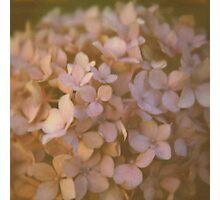 Pink Hydrangea Polaroid Photographic Print