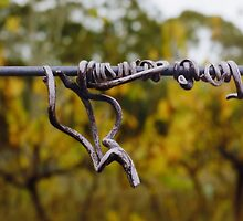 Dried vine tendril Sinclair's Gully vineyard by Harvey Schiller