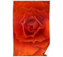 Orange Red Begonia Poster