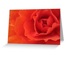 Orange Red Begonia Horizontal Greeting Card