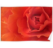 Orange Red Begonia Horizontal Poster