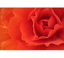 Orange Red Begonia Horizontal Photographic Print