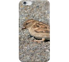 Female Sparrow eating a bee iPhone Case/Skin