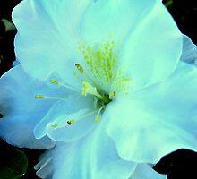 White Azalea by Erica Long