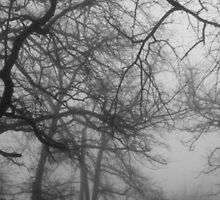 Ghostly Oaks by Harvey Schiller