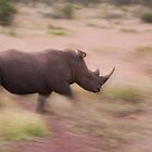 Charging rhino by Mike Gregory