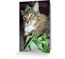 Aroma Therapy Greeting Card