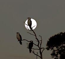 Balcombe Moon by Patricia Gibson