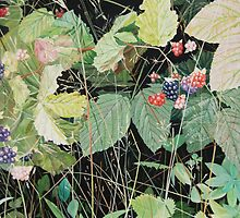 """Wild Berries"" by Barry Kadische"