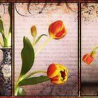 Tulip Triptych by Karen Scrimes