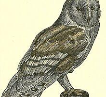 Barn Owl Pen Drawing by JackassKershaw
