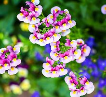 flowering garden. Red, white and pink blooming flowers by PhotoStock-Isra