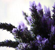 Lavender by Susan Brown
