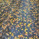 Philip Johnson Scarve Collection #2 - Autumn by Philip Johnson