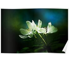 Apple Blossom - Two Flowers Poster