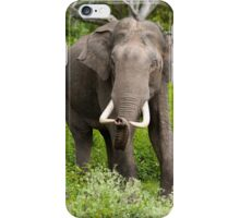 Beautiful Asian Elephant