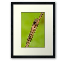 You Can't See Me. Can You? Framed Print