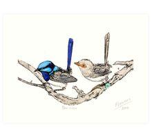 The blue wrens Art Print