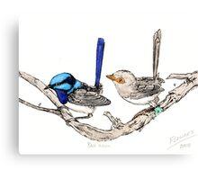 The blue wrens Canvas Print