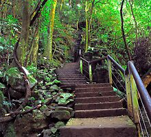 Rain Forest Steps. by Grant Middleditch