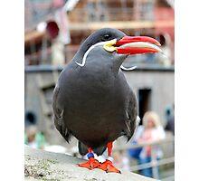 Inca Tern with fish Photographic Print
